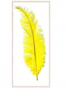 Pluma Avestruz long chick