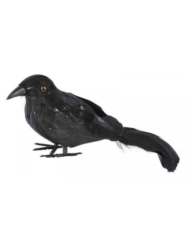 Cuervo plumas