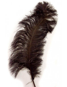 Pluma de avestruz 65-70cm