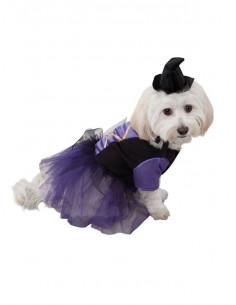 Disfraces de bruja para perros