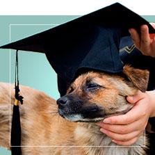 Accesorios para Graduacion